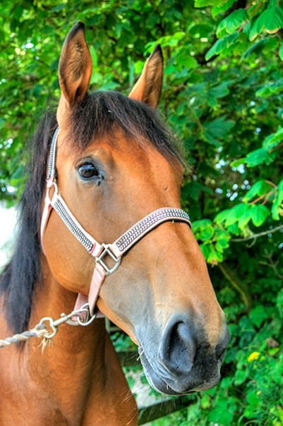 Lola at Broomhill Manor Stables