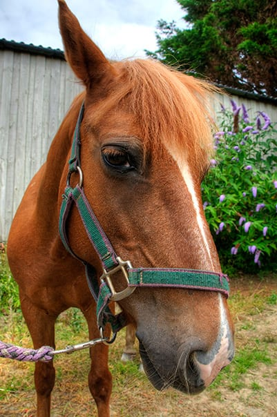 Lucy at Broomhill Manor Stables