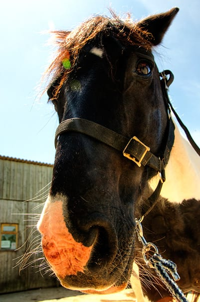 Mojo at Broomhill Manor Stables