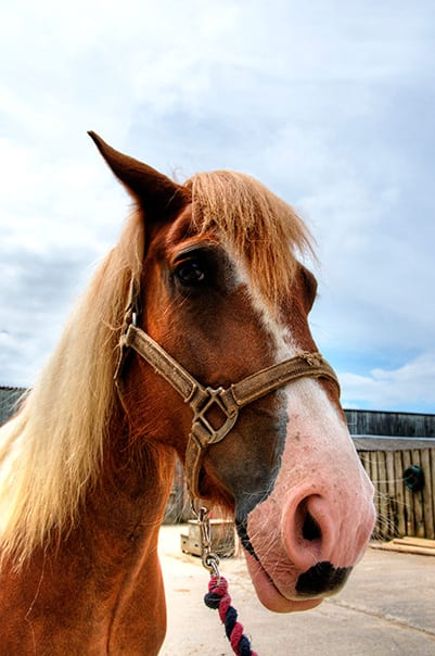 Patch at Broomhill Manor Stables