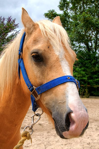 Percy at Broomhill Manor Stables