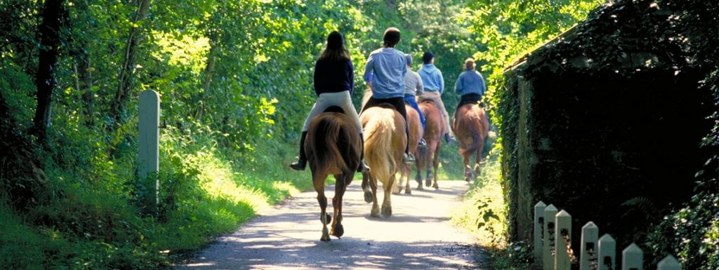 Broomhill Manor Horse Riding Hack