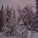 Winter Snowfall at Broomhill Manor
